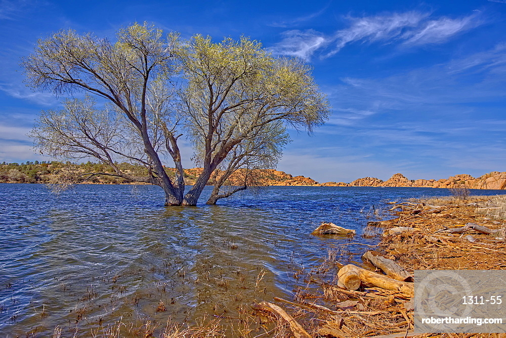 A lone tree isolated just off shore in Watson Lake in Prescott, Arizona, United States of America, North America