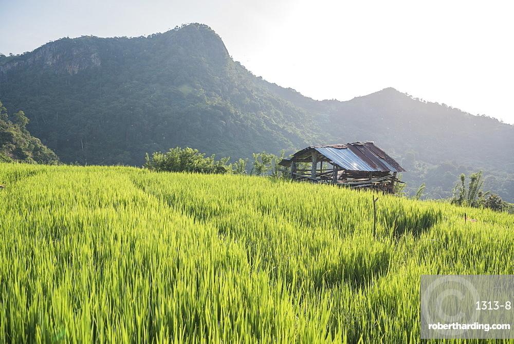 A hut on a tea plantation in the small village of Hingurukaduwa, Sri Lanka, Asia