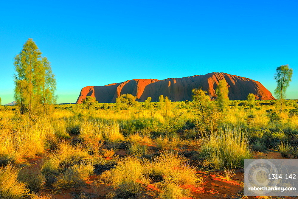 Beautiful landscape of huge Ayers Rock (Uluru) monolith from Talinguru Nyakunytjaku Sunrise viewing area in Uluru-Kata Tjuta National Park, UNESCO World Heritage Site, Outback, Northern Territory, Australia, Pacific