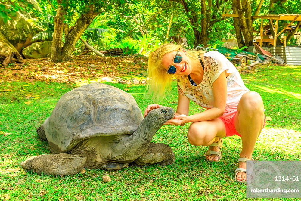 Happy tourist woman touches curious Aldabra Giant Tortoise (Aldabrachelys gigantea) which stretches wrinkled neck, Turtle Sanctuary, Curieuse, Nature Reserve, Seychelles, Indian Ocean, Africa