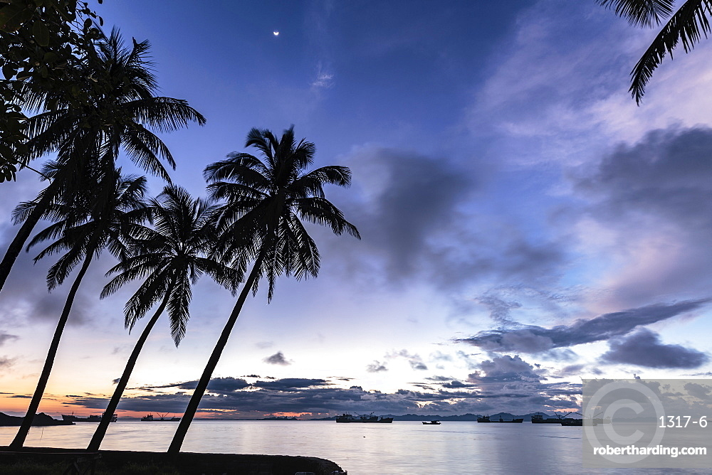 Palm trees by Sittwe harbour before sunrise, with clouds and small moon in the dawn sky