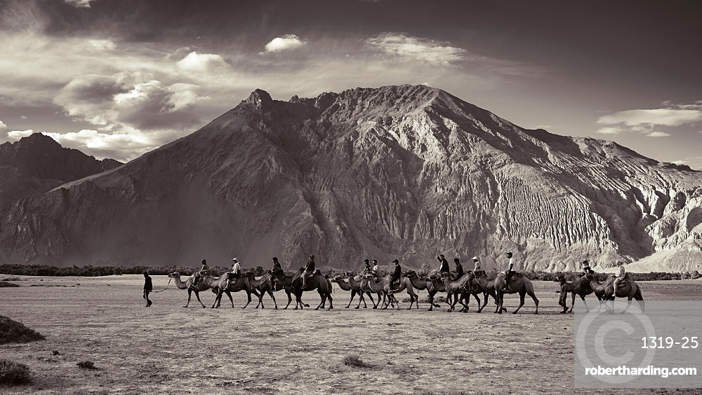 Tourists enjoying camel ride in Nubra valley in Ladakh region of India. Bactrian camel camels are very popular amongst tourists