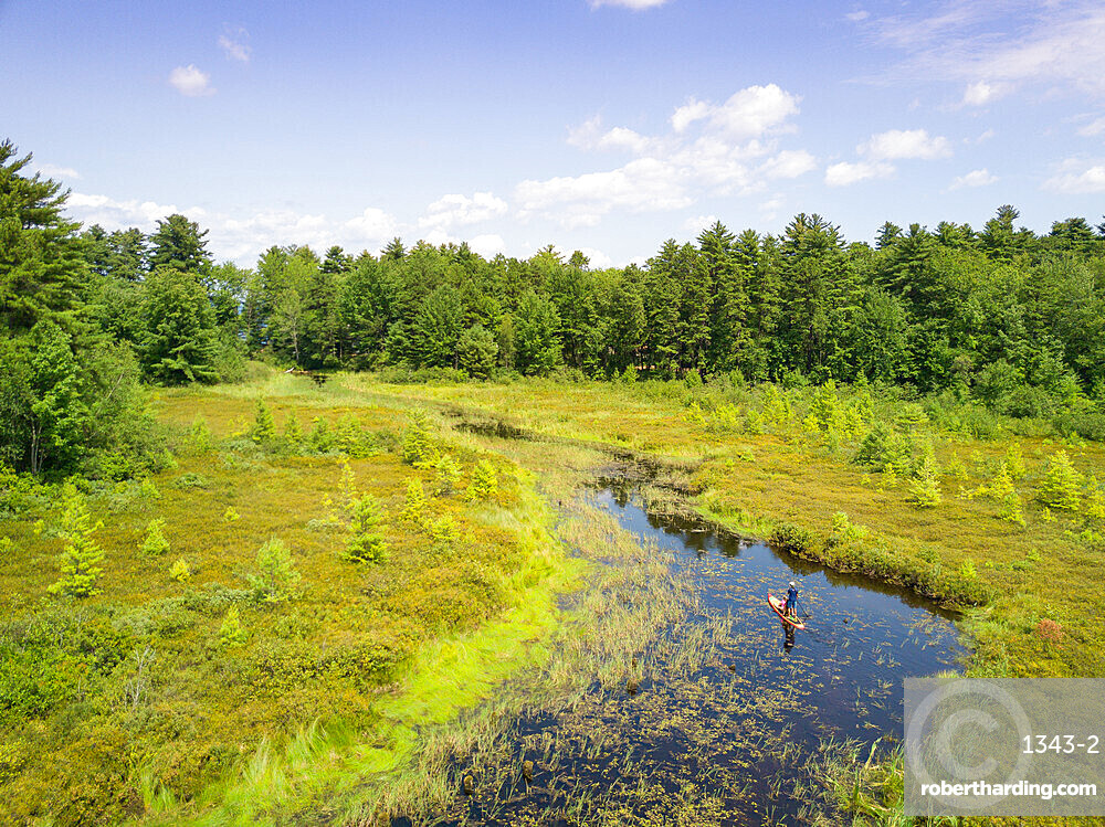 Stand up paddle boarder and daughter cruise through a fresh water marsh near Sebago Lake, Maine, United States of America, North America