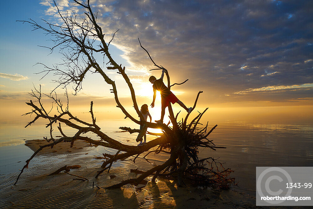 Brother and sister on the branches of a dead tree at Jockeys Ridge State Park, Nags Head, Albemarle Sound, North Carolina, United States of America, North America