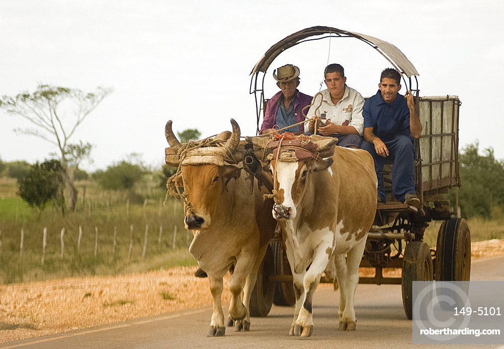 Three men riding in an ox cart, Sancti Spiritus province, Cuba, West Indies, Central America