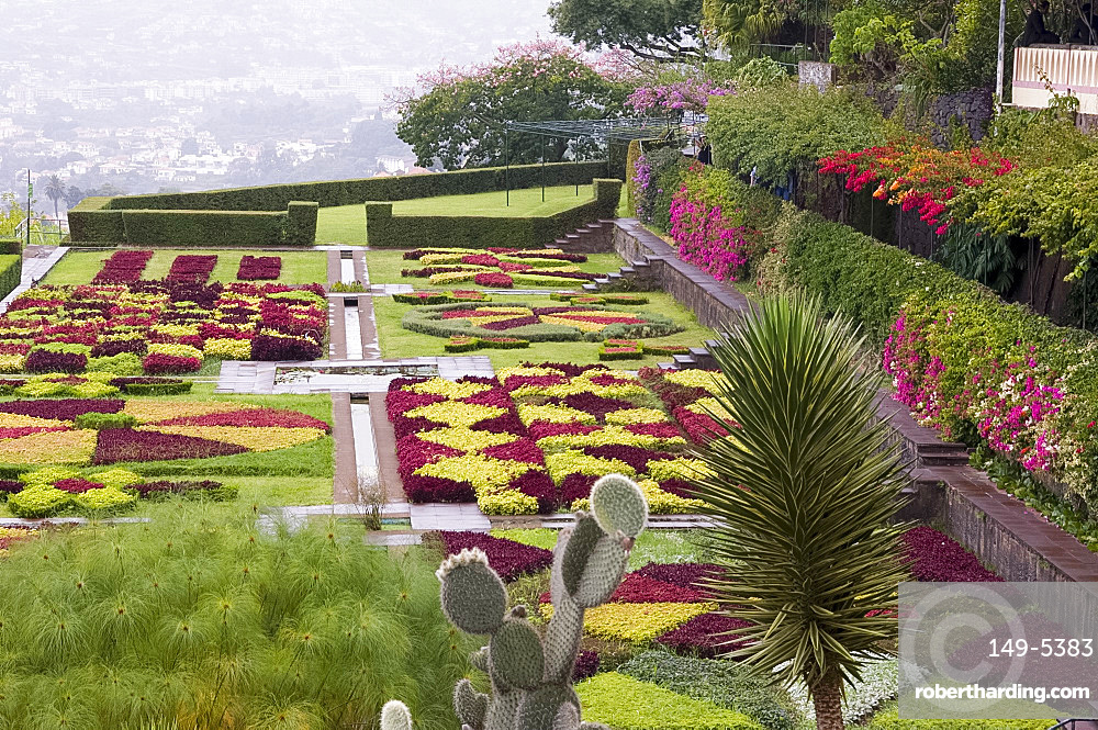 A terrace planted in geometric shapes with contrasting red and green plants in the Jardim Botanico, Funchal, Madeira, Portugal, Europe