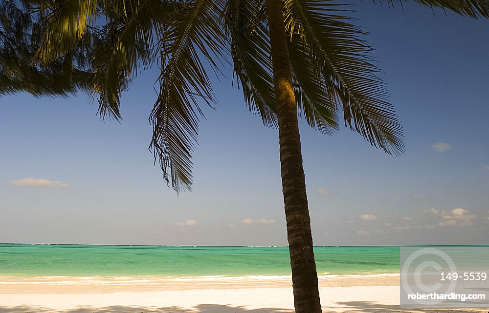 A palm tree over a white sand beach and emerald sea, Paje, Zanzibar, Tanzania, East Africa, Africa