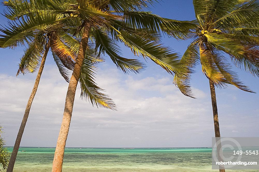 Palm trees above emerald sea, Pingwe, Zanzibar, Tanzania, East Africa, Africa