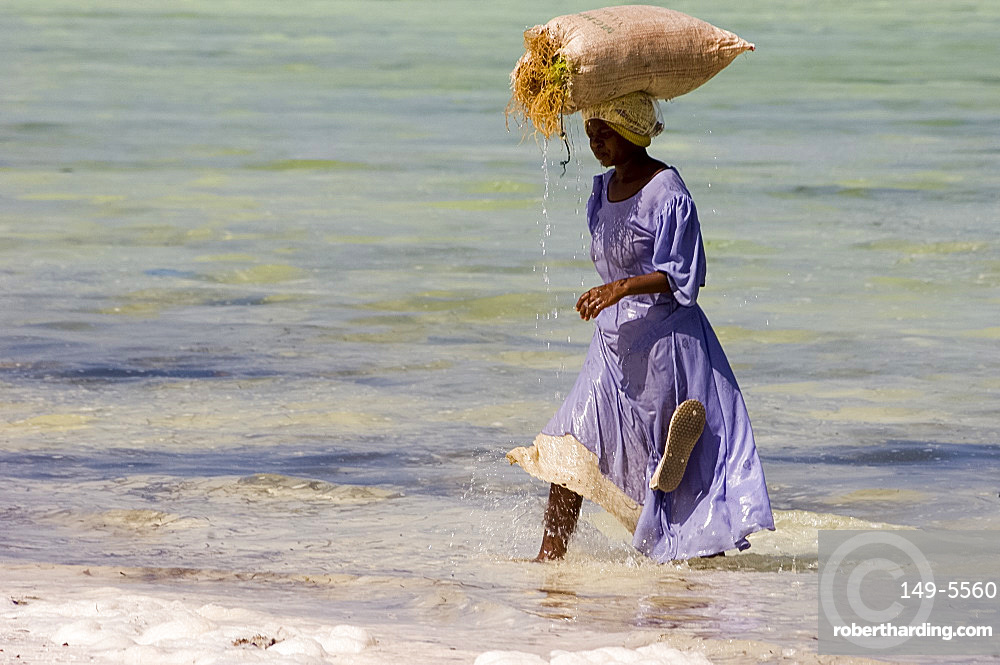A woman in colourful dress carrying a bag of harvested seaweed on her head, Paje, Zanzibar, Tanzania, East Africa, Africa