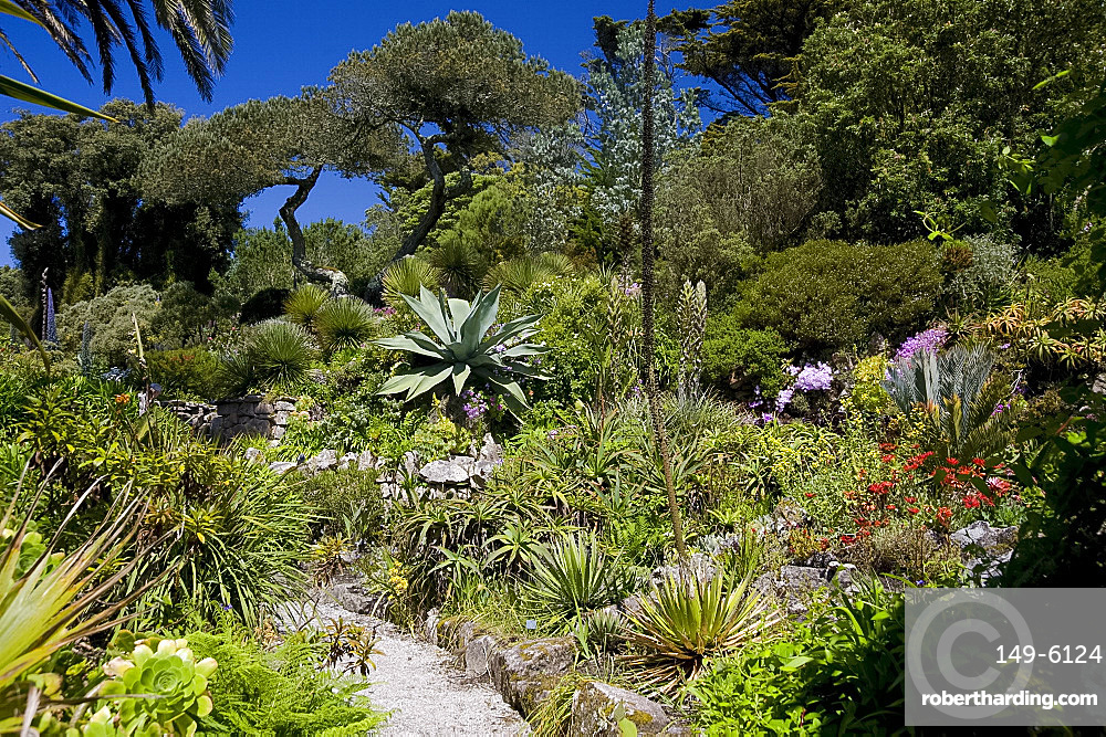 Subtropical plants including Agave Americana (cactus), The Abbey Gardens, Tresco, Isles of Scilly, United Kingdom, Europe