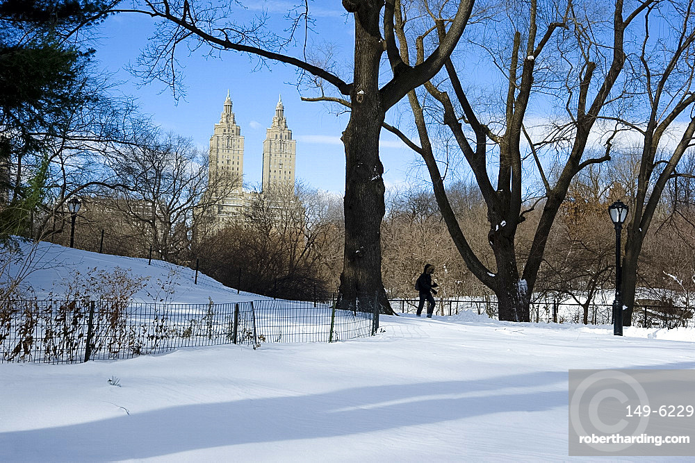 Fresh snow in Central Park, New York City, New York State, United States of America, North America