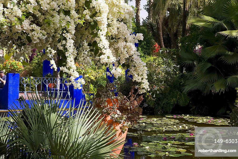 White bougainvillea cascading over an ornamental pond with water lilies at the Majorelle Garden in Marrakech, Morocco, North Africa, Africa