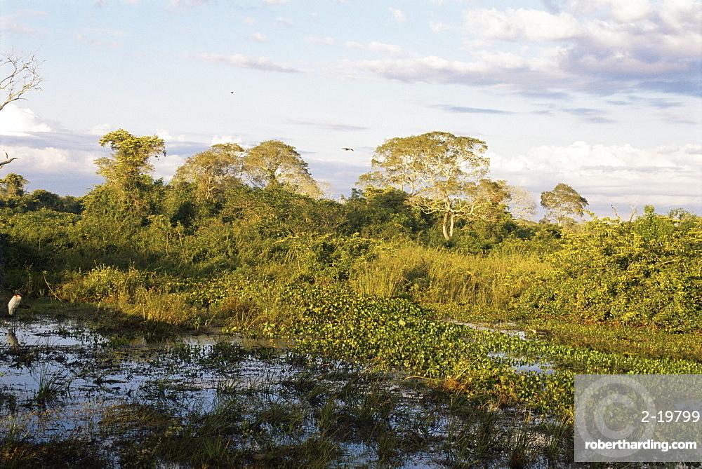 Matto Grosso, Pantenal, Brazil, South America