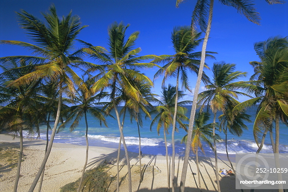 Palm trees and beach, Bottom Bay, Barbados, West Indies, Caribbean, Central America