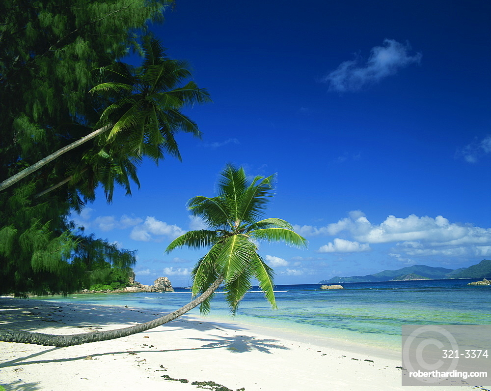 Leaning palm tree and beach, Anse Severe, La Digue, Seychelles, Indian Ocean, Africa