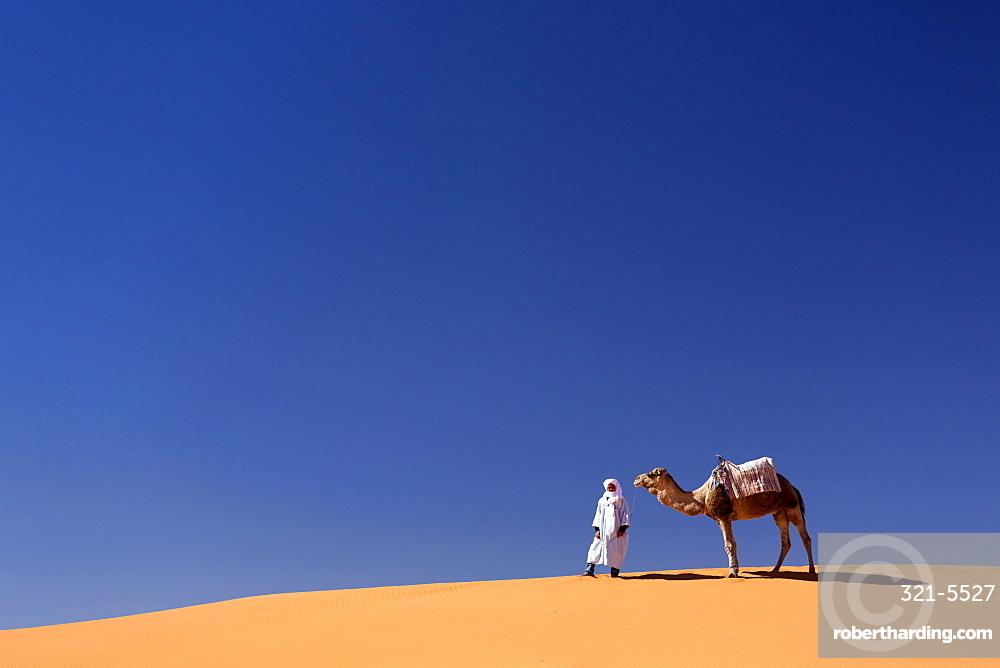 Berber man with camel on the ridge of an orange sand dune in the Erg Chebbi sand sea, Sahara Desert near Merzouga, Morocco, North Africa, Africa