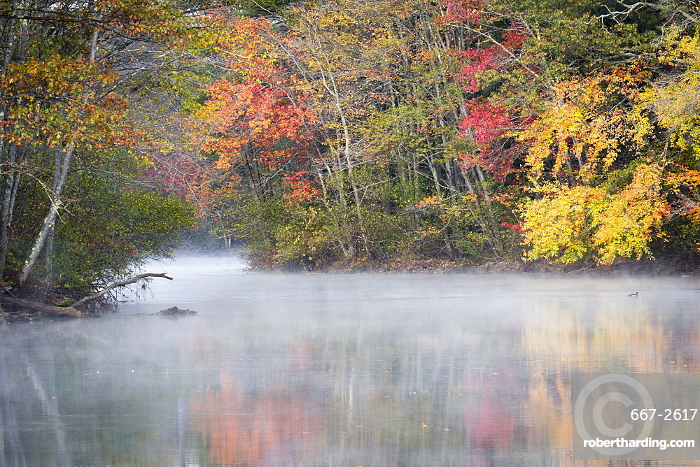 Morning mist and fall colours, River Pemigewasset, New Hampshire, New England, United States of America, North America