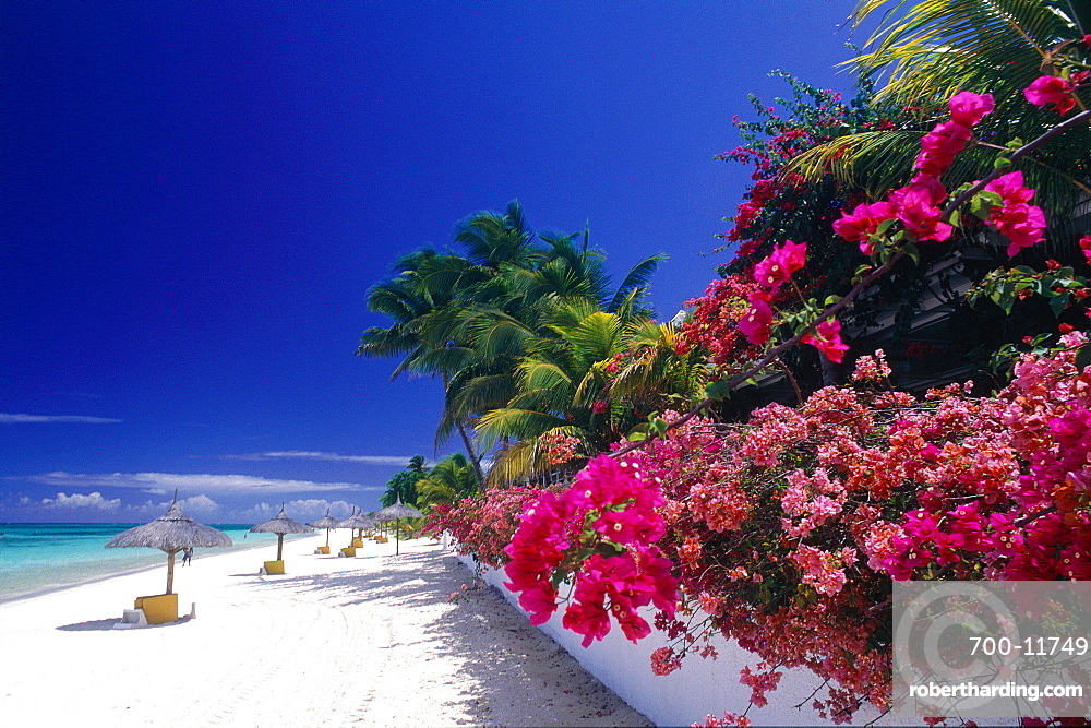 Mauritius Island, The Beach And Bougainvillea Flowers At Paradis Beach