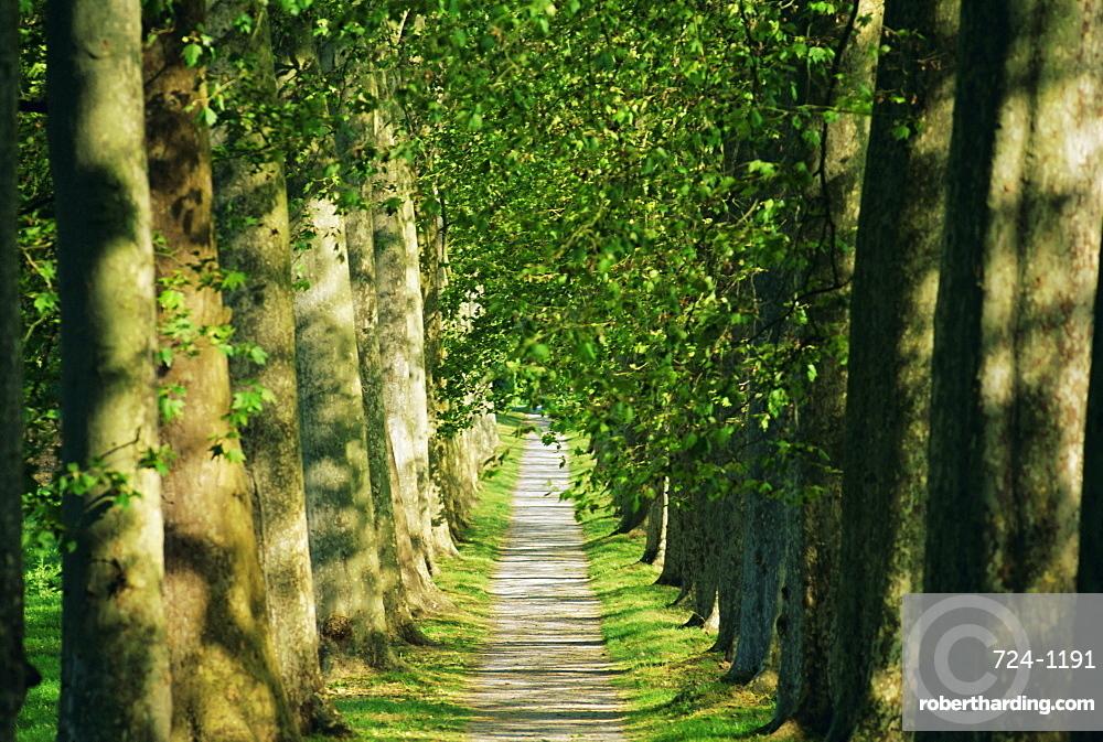 Avenue of plane trees, planted 1809, Canal du Midi, Seuil de Naurouze, Languedoc-Roussillon, France, Europe