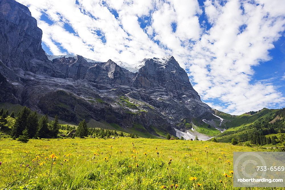 Wetterhorn 3692m, Jungfrau-Aletsch, UNESCO World Heritage Site, Swiss Alps, Switzerland, Europe