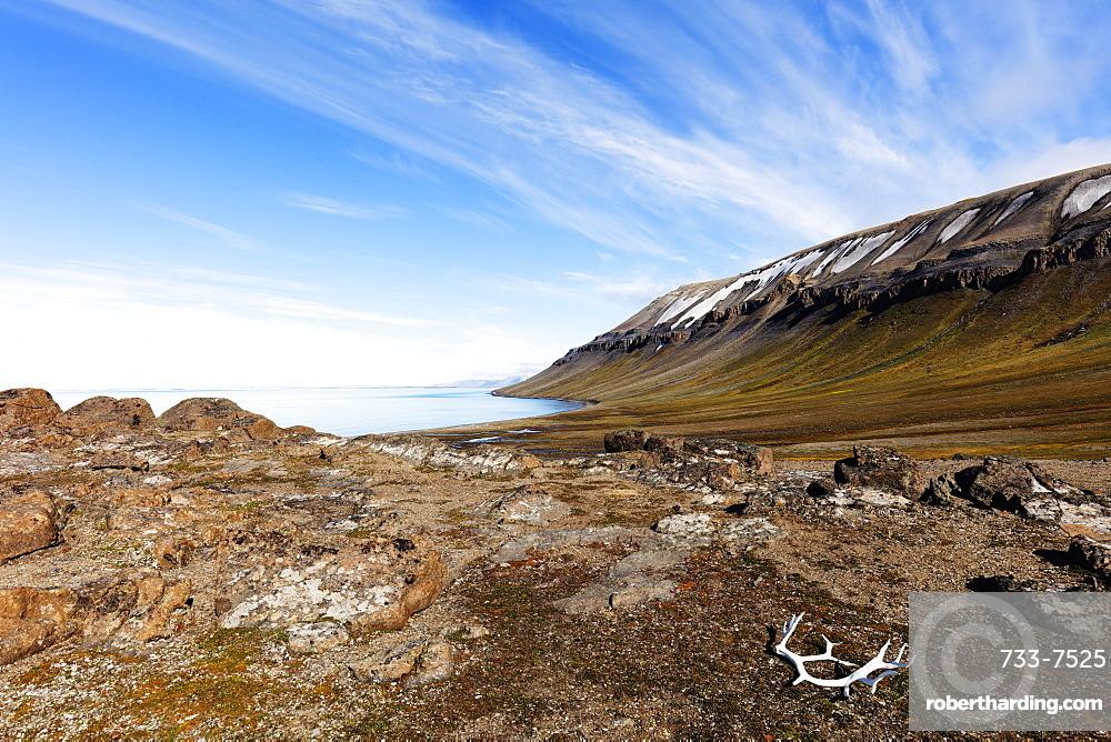 Moulted Reindeer antlers, Kapp Lee, Spitsbergen, Svalbard, Arctic, Norway, Europe