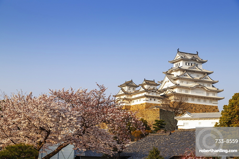 Cherry blossom at the 17th century Himeji Castle, UNESCO World Heritage Site, Hyogo, Honshu, Japan, Asia