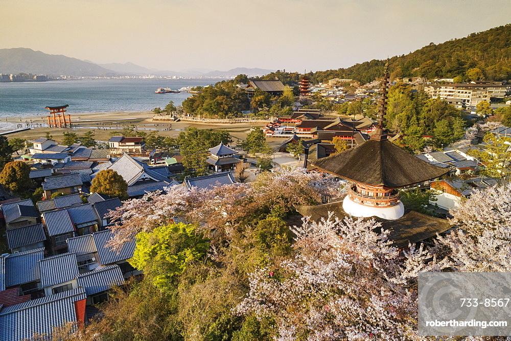 Cherry blossom, Miyajima Island, Hiroshima Prefecture, Honshu, Japan, Asia