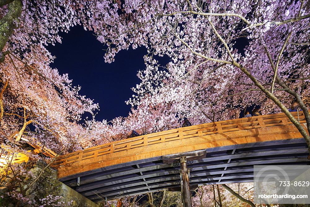 Heart shaped cherry blossom at Takato castle, Takato, Nagano Prefecture, Honshu, Japan, Asia