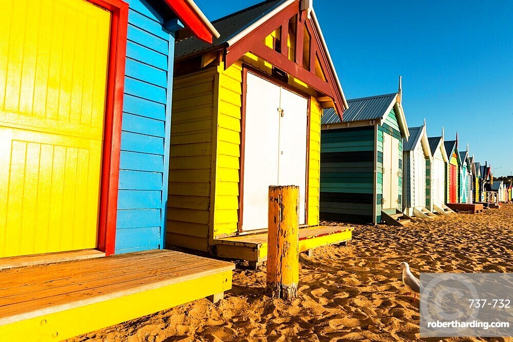Bathing boxes and Silver gull (Chroicocephalus novaehollandiae)l on shores of Port Phillip Bay, Brighton, Victoria