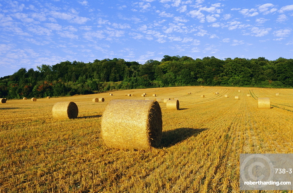 Hay bales in a field in late summer, Kent, England, UK, Europe