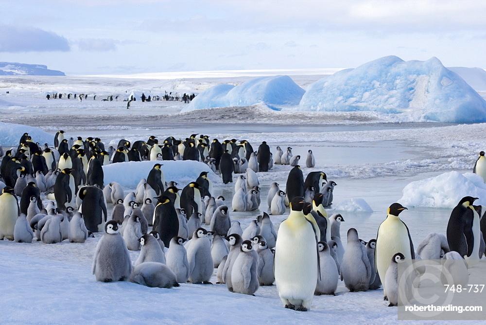 Colony of emperor penguins (Aptenodytes forsteri), Snow Hill Island, Weddell Sea, Antarctica, Polar Regions