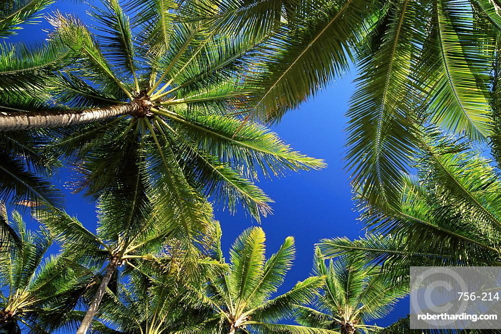 Palm trees, Palm Cove, Queensland, Australia, Pacific