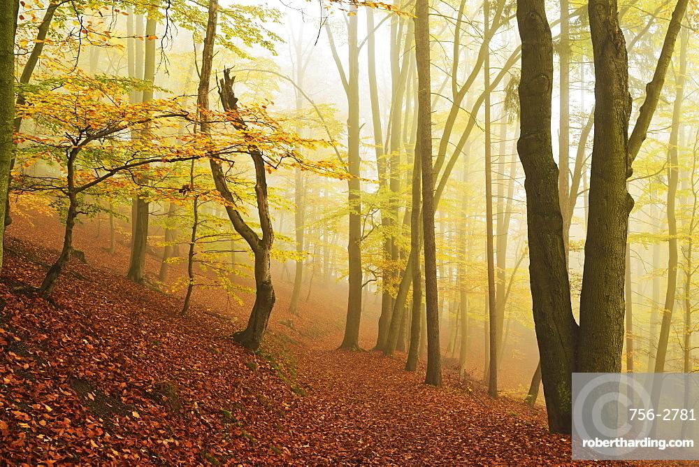 Autumn forest around Karlovy Vary, Czech Republic, Europe