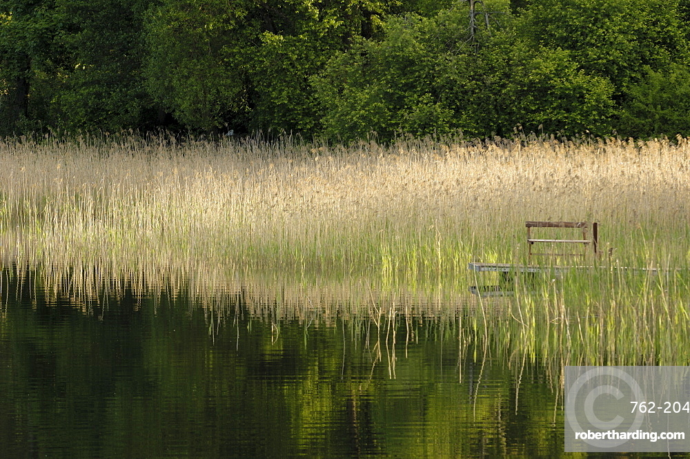 Reeds along the shore of Trakai Lake, near Vilnius, Lithuania, Baltic States, Europe