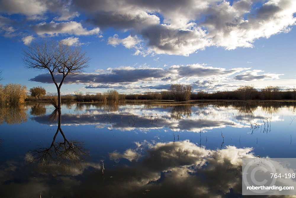 Bare tree reflected in the water of a floodplain, Bosque del Apache National Wildlife Refuge, New Mexico, United States of America, North America