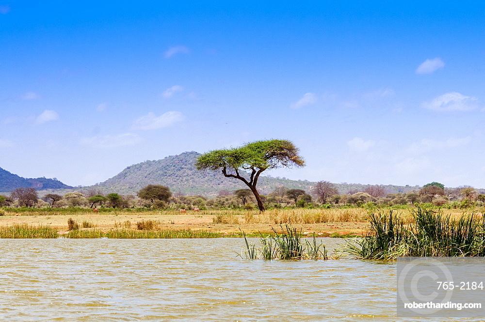 Shore of Lake Jipe, Tsavo West National Park, Kenya, East Africa, Africa