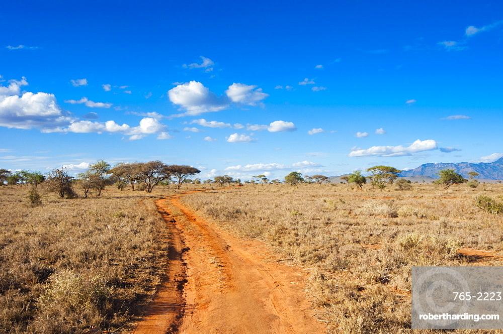 Trail in the Savannah, Taita Hills Wildlife Sanctuary, Kenya, East Africa, Africa