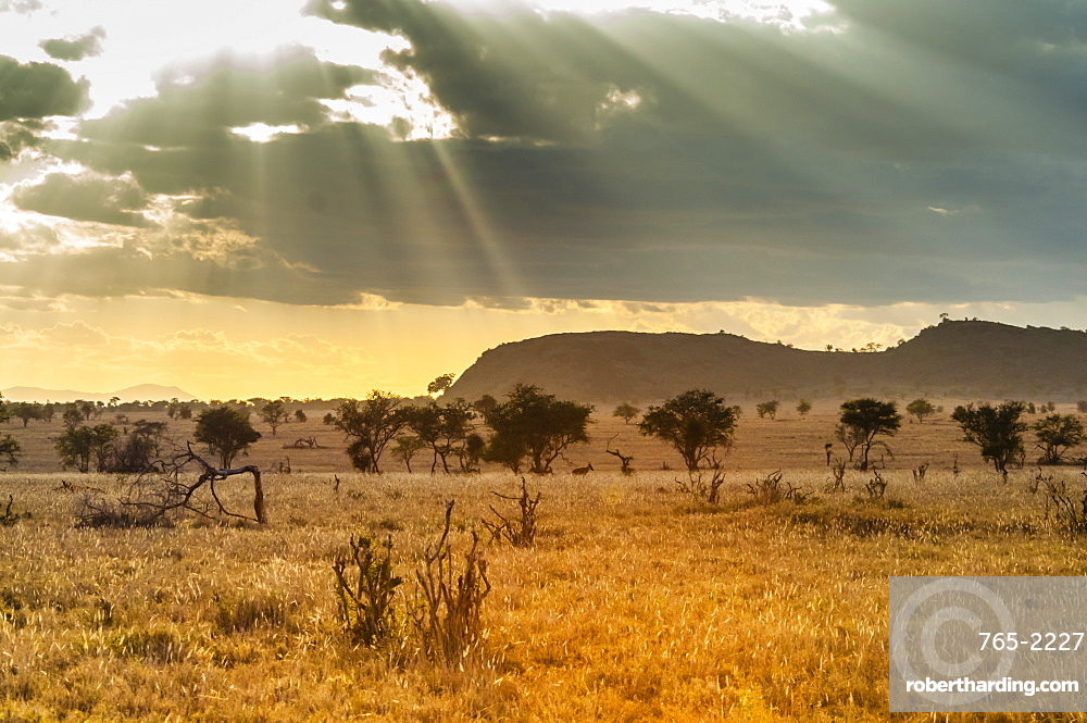The Savannah, Taita Hills Wildlife Sanctuary, Kenya, East Africa