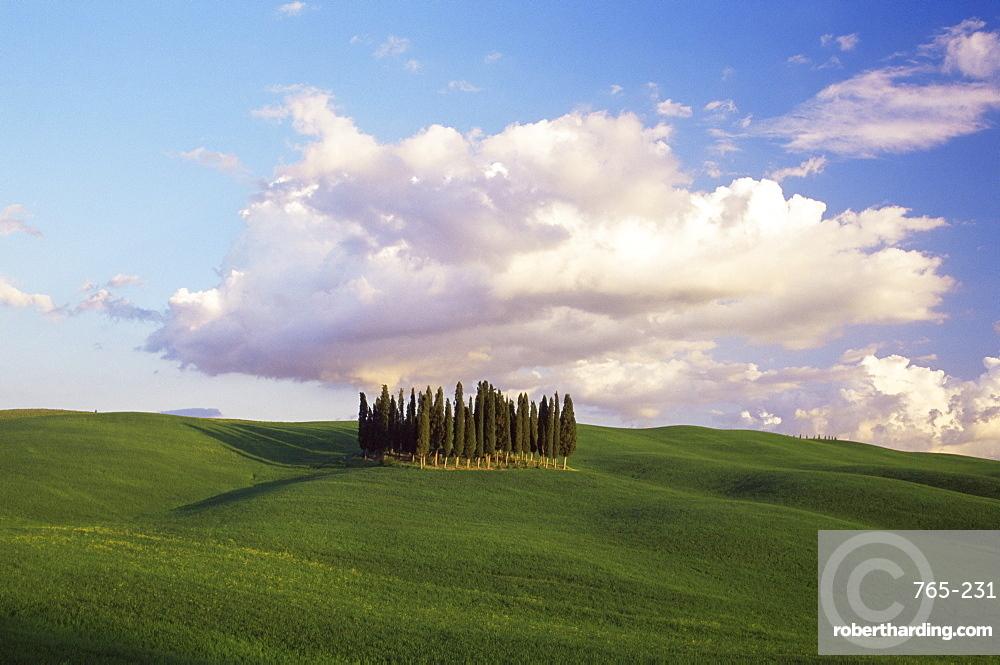 Countryside near Montalcino, Siena area, Tuscany, Italy, Europe