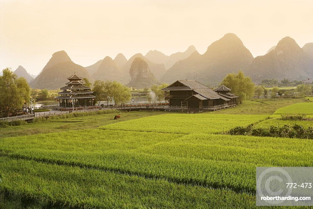 Rice fields, Yangshuo, Guangxu Province, China, Asia