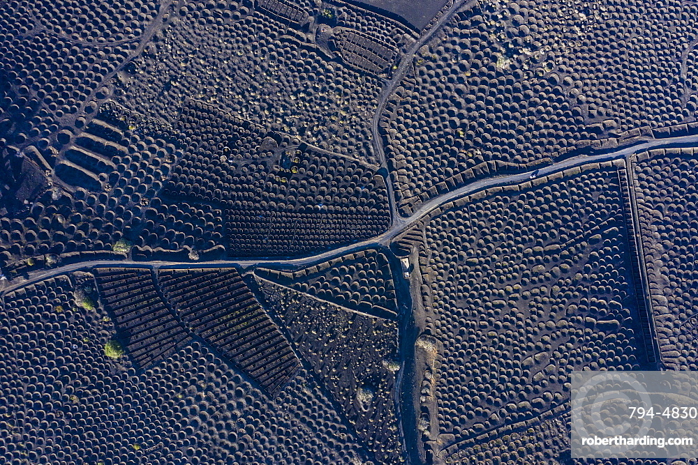 Spain, Canary Islands, Lanzarote, La Geria, aerial view over the Vineyards and black volcanic soil