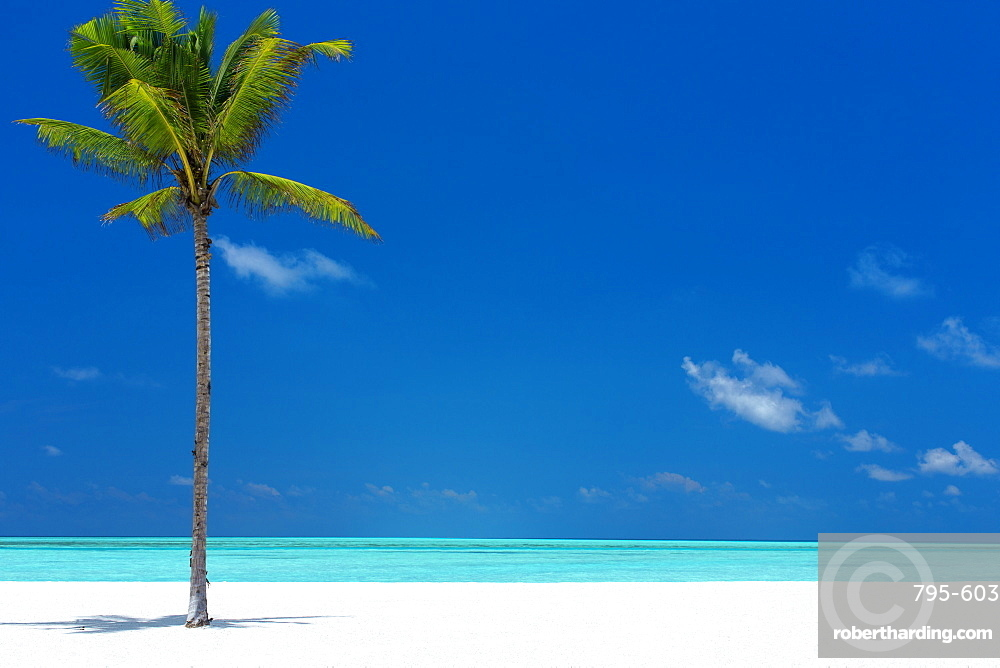 Palm tree and tropical beach, The Maldives, Indian Ocean, Asia
