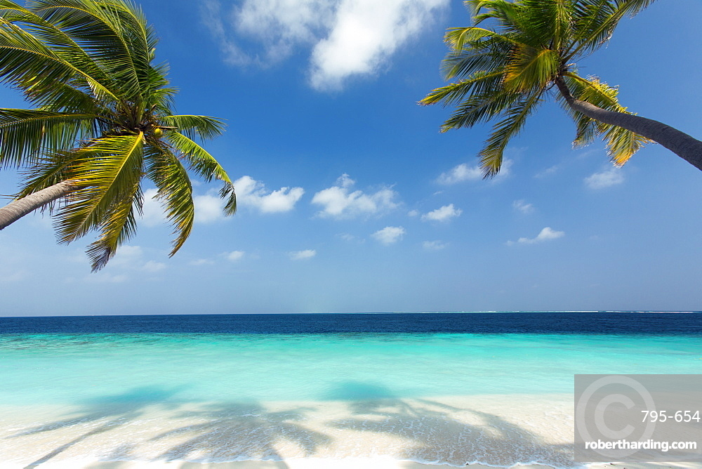 Tropical beach and palm trees, The Maldives, Indian Ocean, Asia