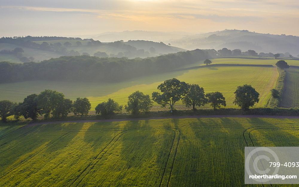 Rolling farmland on a hazy summer morning, Crediton, Devon, England, United Kingdom, Europe