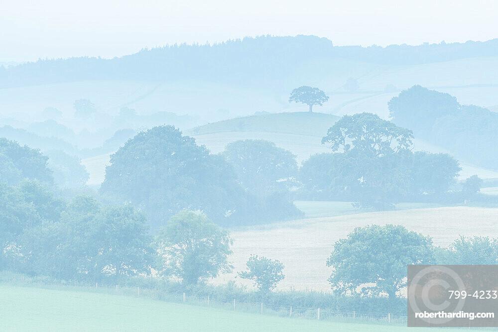 Rolling Devon countryside at dawn on a misty summer morning, Devon, England, United Kingdom, Europe