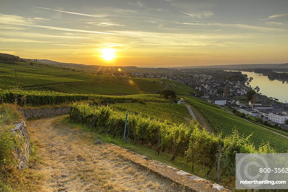 Vineyards at sunrise, Rudesheim, Rhineland-Palatinate, Germany, Europe