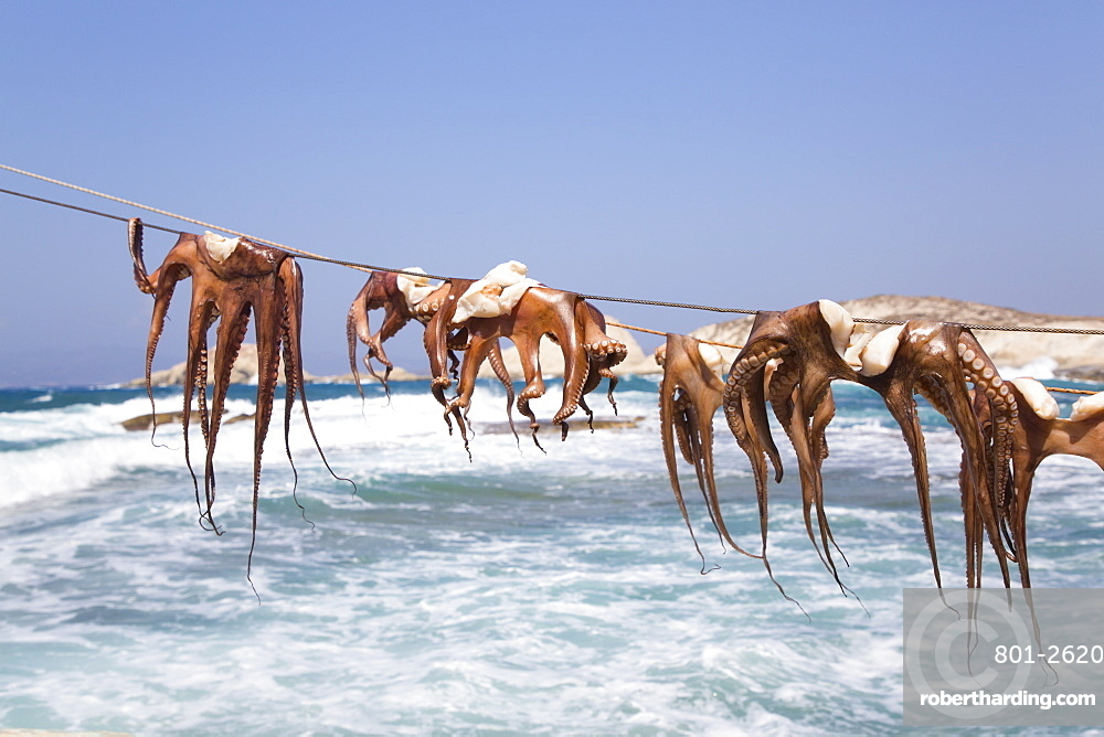 Drying Octopus, Mandrakia Village, Milos Island, Cyclades Group, Greek Islands, Greece, Europe