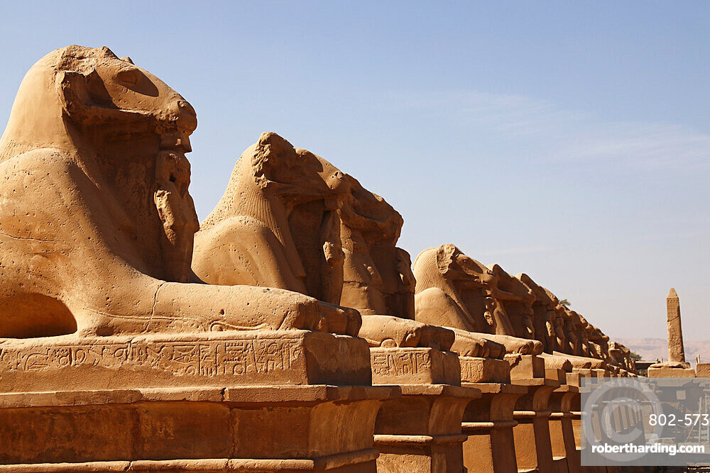 Avenue of Sphinxes, Karnak Temple, UNESCO World Heritage Site, Luxor, Thebes, Egypt, North Africa, Africa
