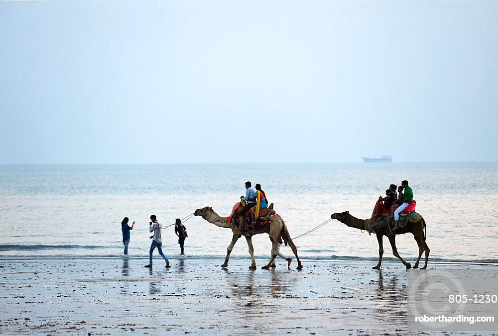 Diwali holidaymakers taking camel rides along the shore at sunset, Mandvi, Gujarat, India, Asia