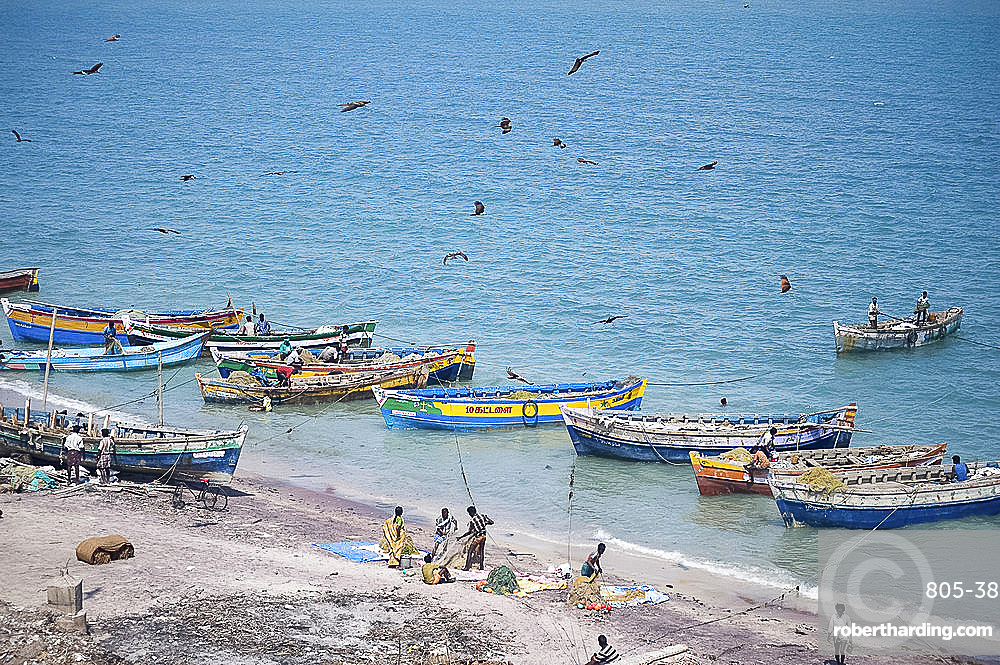 Brahmin kites soar over the boats as the morning's catch of fish is unloaded, Dhanushkodi, Tamil Nadu, India, Asia